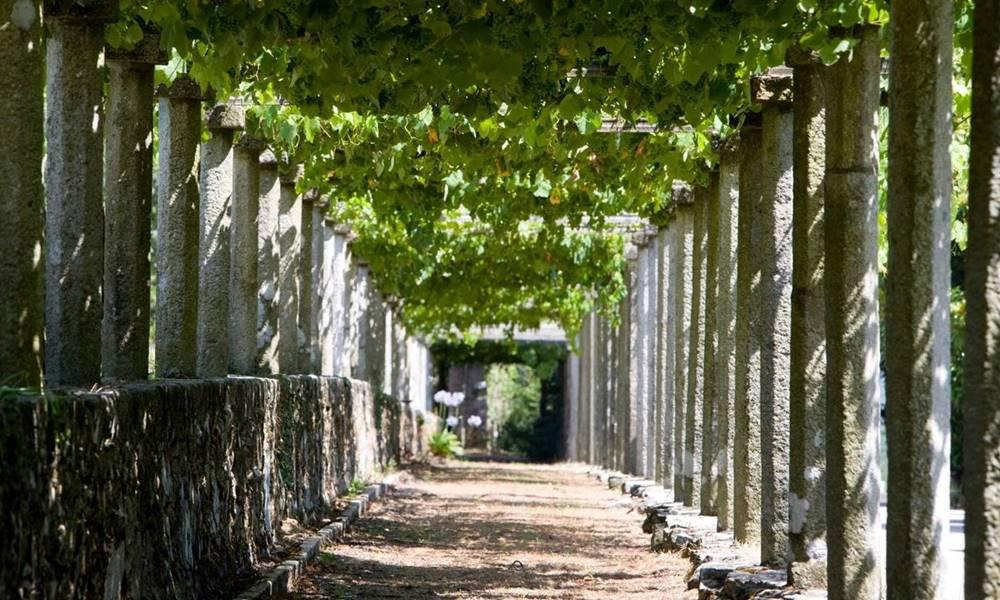Albariño - Nuestros vinos
