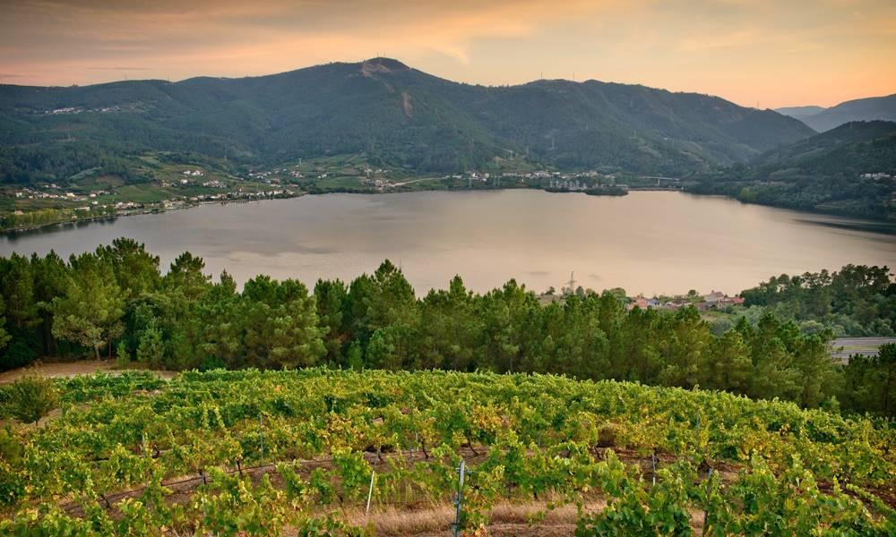 Godello - Nuestros vinos