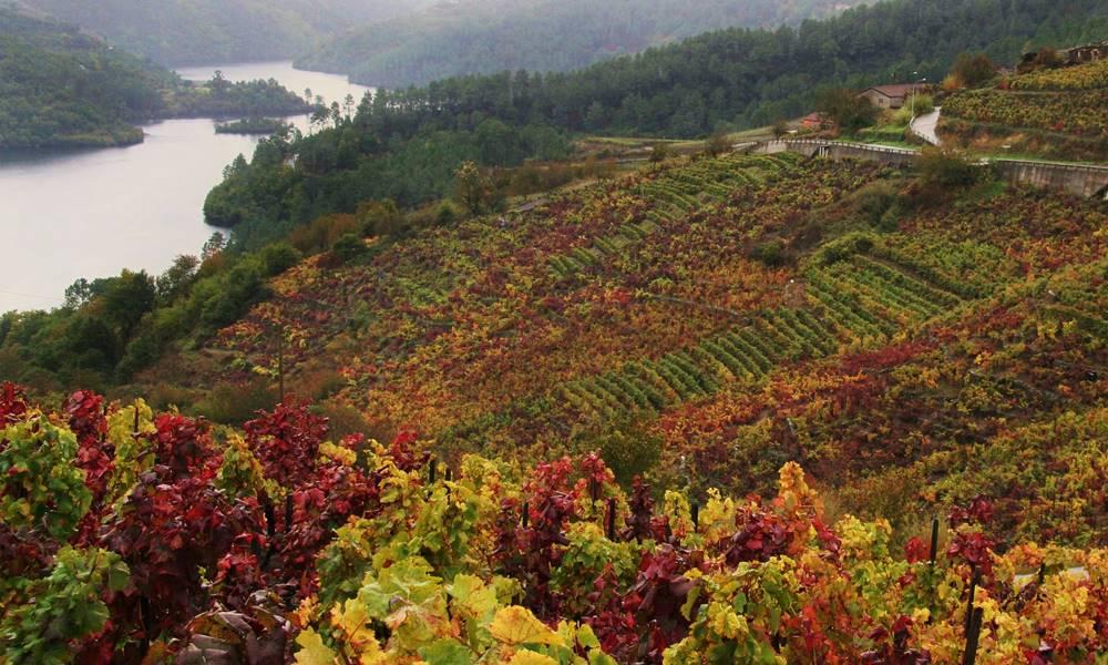 Ribeiro - Nuestros vinos